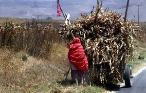 Masai Load