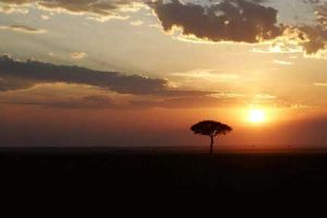 Kenyan Sunset and Acacia Tree