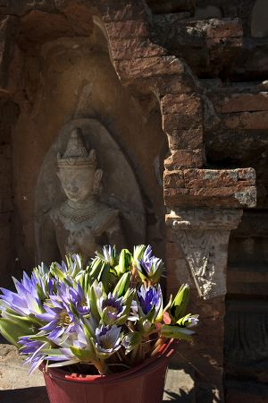 Lotus Flowers at Ti Lommlo Pagoda  Bagan