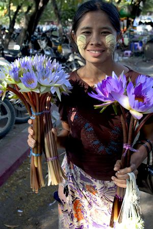 Mandalay Lotus Seller