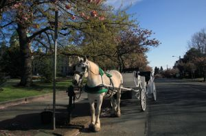 Horse Carriage in Victoria, Vancouver Island
