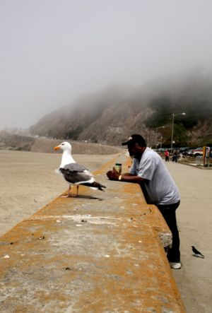 San Francisco Foggy  Sea Wall With Man and Gull