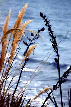 Moeraki Beach  Flora
