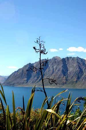 Lake Hawea  South Island