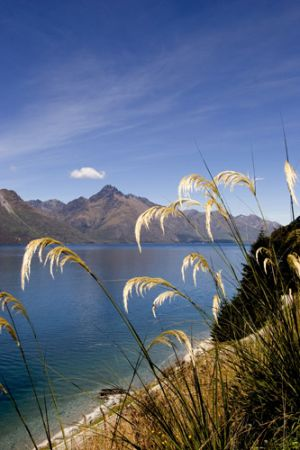 Native Toi Toi Grasses  Queenstown