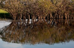 Cooinda Reflection on Yellow Waters