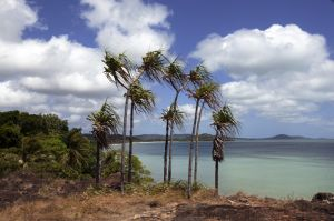 Palms at The Tip Cape York