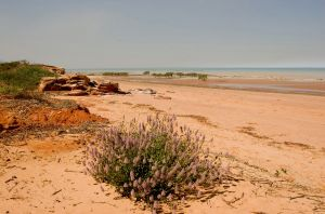 Broome Beach Colours and Mulla Mulla
