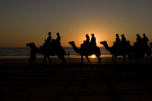 Cable Beach Camels at Sunset