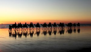 Camel Rides on Cable Beach