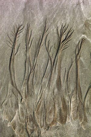 Cable Beach Sand Tree Patterns