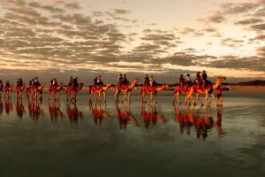 Red Camels In The Sunset