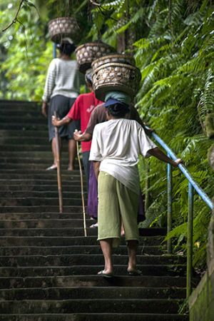 Soil Carriers of Ubud