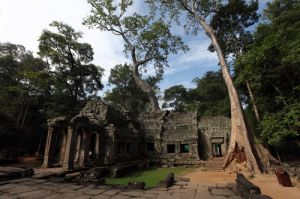 Trees at Ancient Bayon