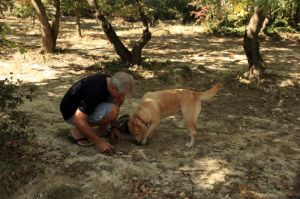 Truffle Dog Working in Burgundy
