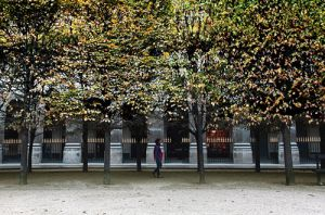 Autumn Trees in the Gardens of the Royal Palace Paris