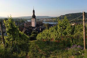 Rudesheim Town and Vineyards in  Early Morning